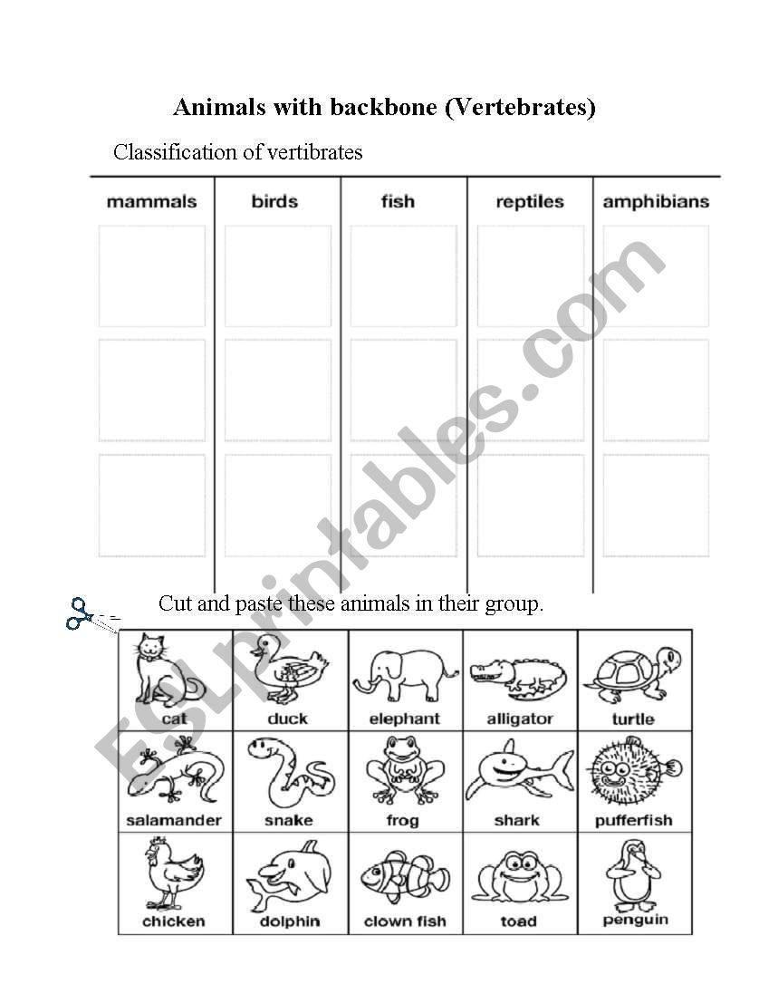 hight resolution of Animals with backbone - ESL worksheet by campus