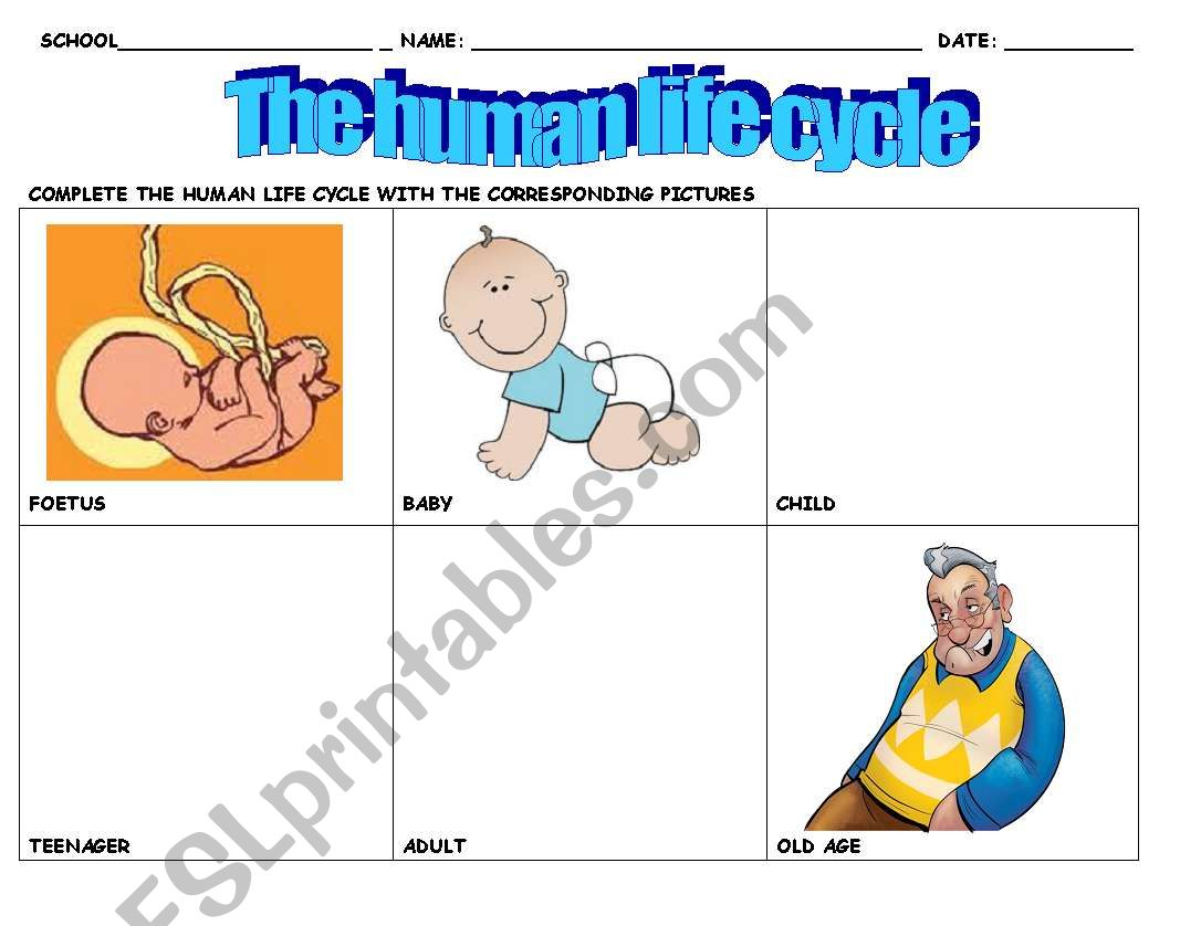 Life Cycle Of A Human Worksheet