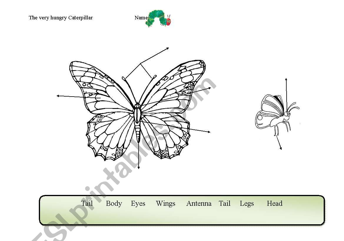 English Worksheets Butterfly Parts Of The Body Related