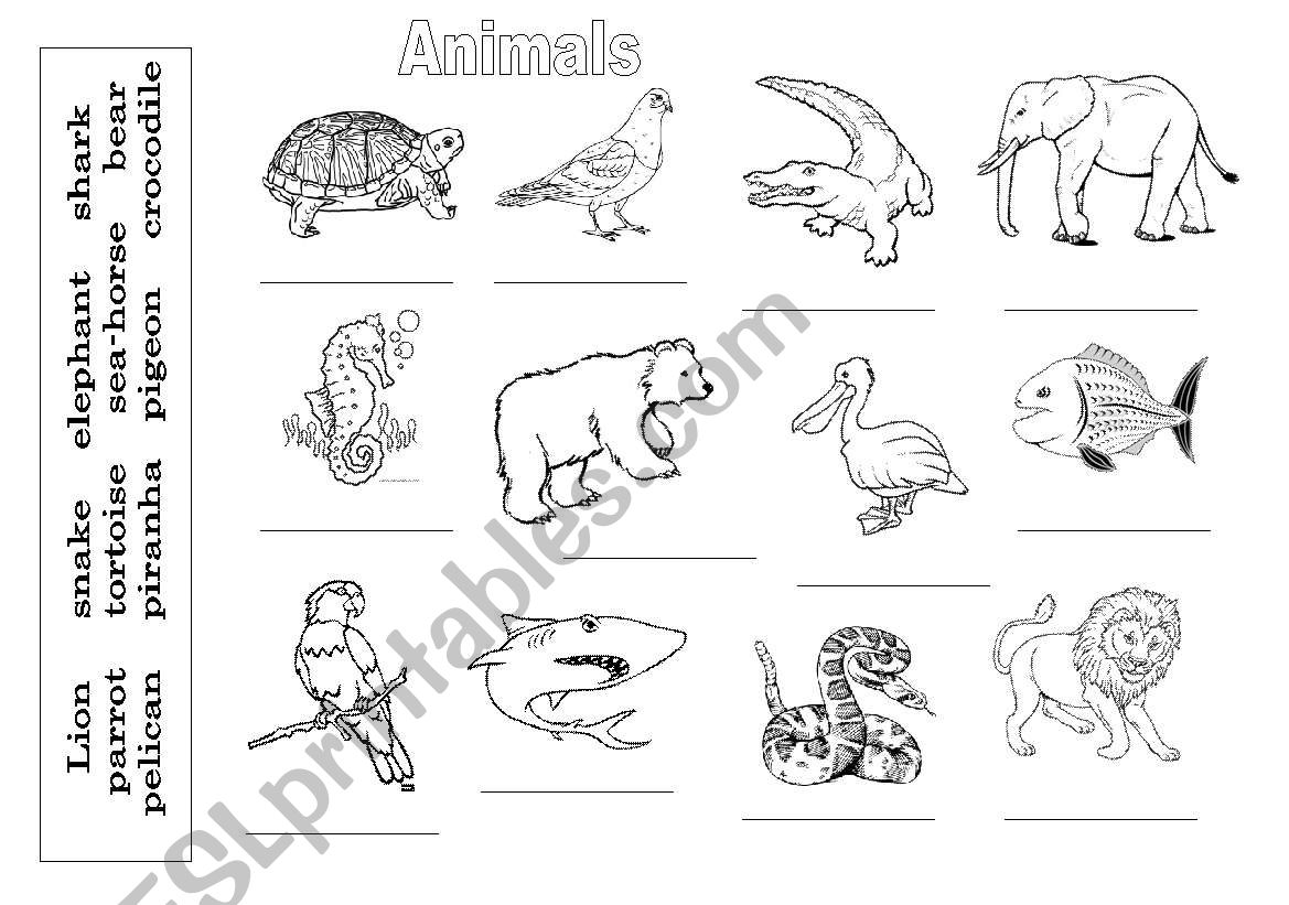 English Worksheets Animals Birds Mammals Fishes