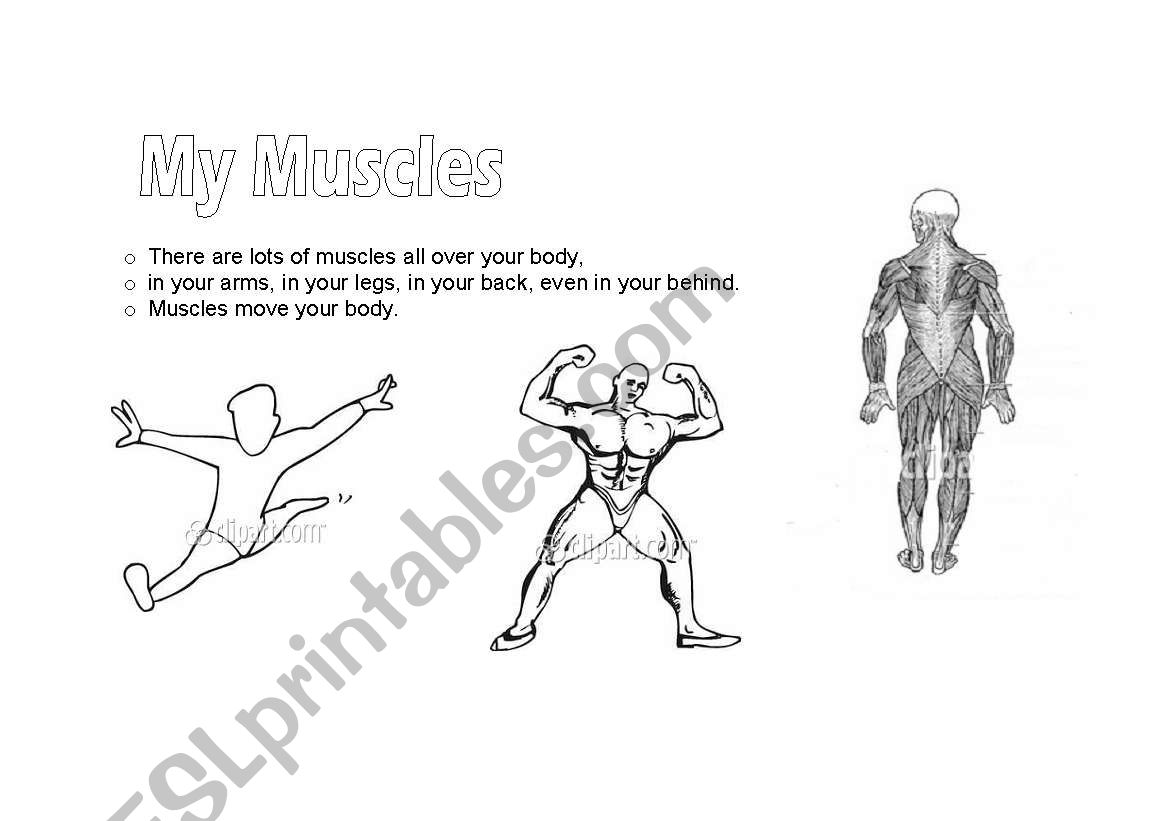 English Worksheets My Muscles