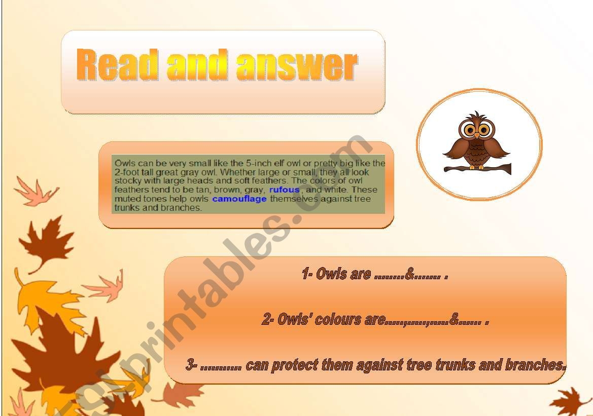 An Owl Read And Answer