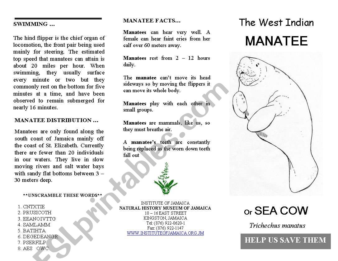 English Worksheets West Indian Manatee