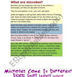 Microorganisms Worksheet Ks2   Printable Worksheets and Activities for  Teachers [ 1086 x 838 Pixel ]