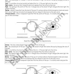 Human Eye Diagram Label Worksheet Wiring 12v Caravan Fridge To Enchanted Learning Schematic Library Best