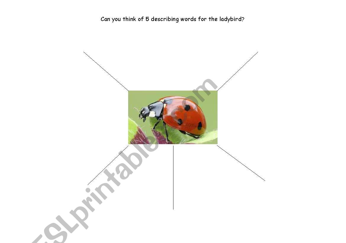 English Worksheets Describe The Ladybird