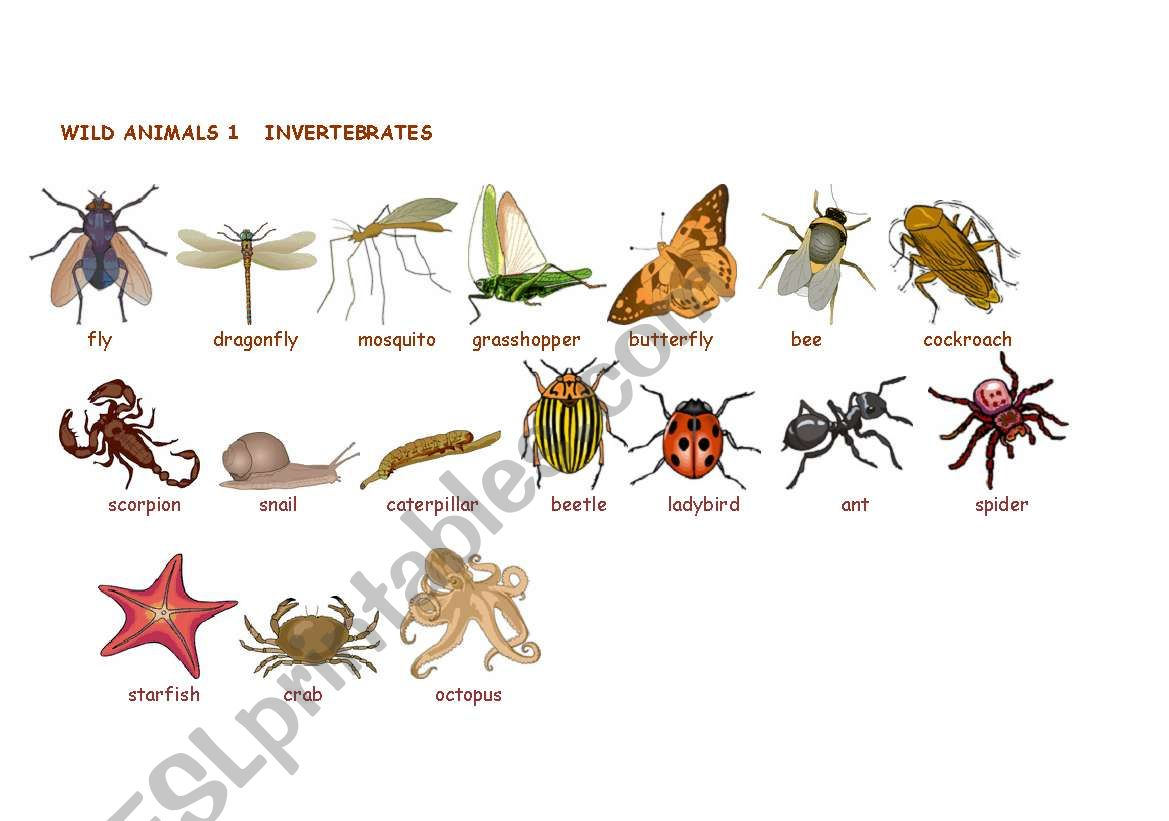 Wild Animals Invertebrates