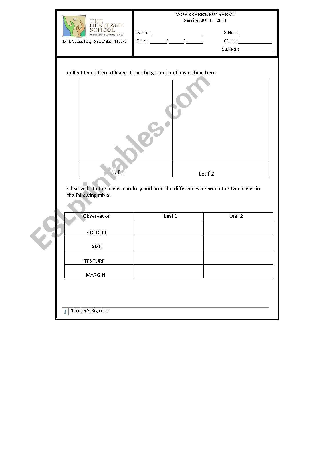 English Worksheets Leaves