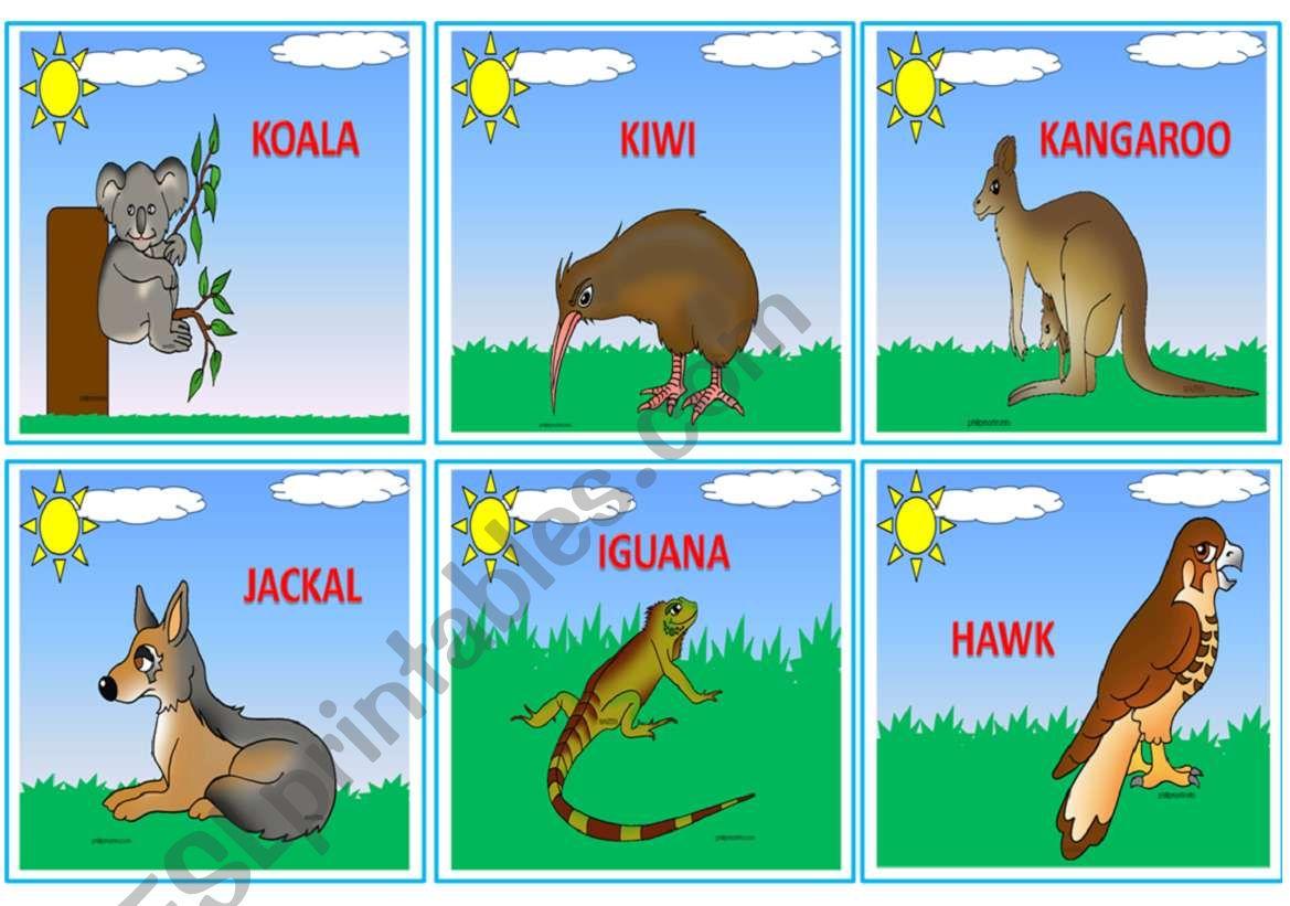 Wild Animals Flashcards 3 3