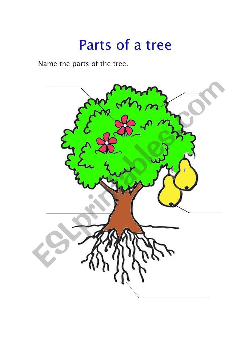 English worksheets parts of a tree