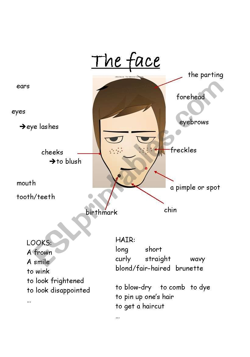 hight resolution of the face vocabulary worksheet