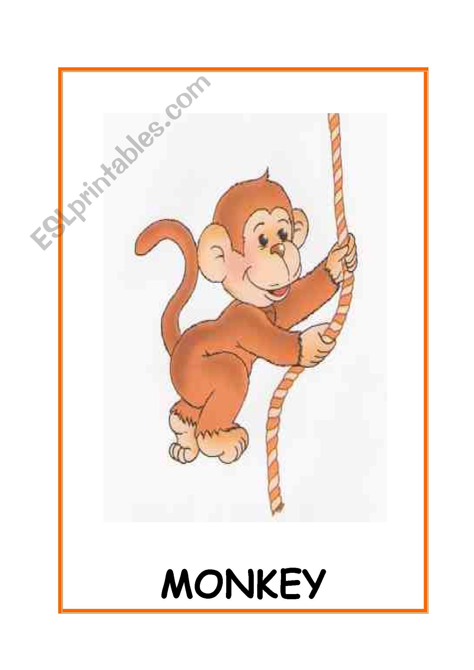Animalste Animal Cards 10 Flashcards