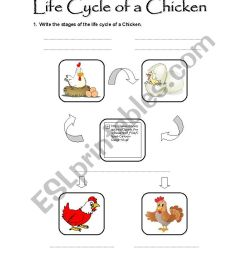Life Cycle Of A Chicken Worksheet - Bilscreen [ 1169 x 826 Pixel ]