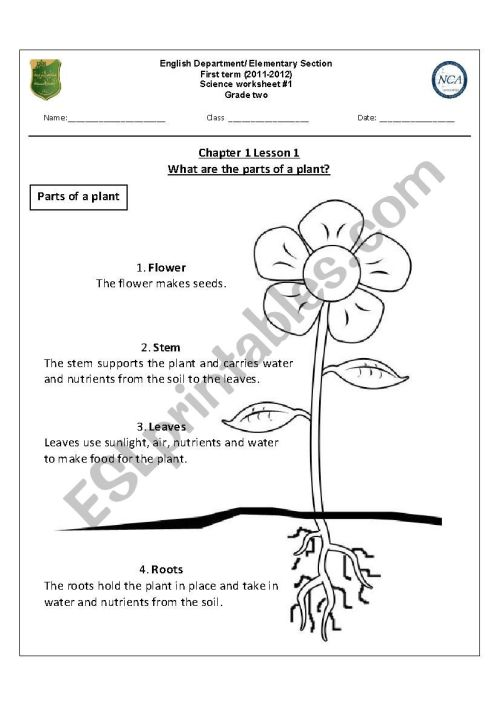 small resolution of what are the parts of a plant? - ESL worksheet by nohabsat