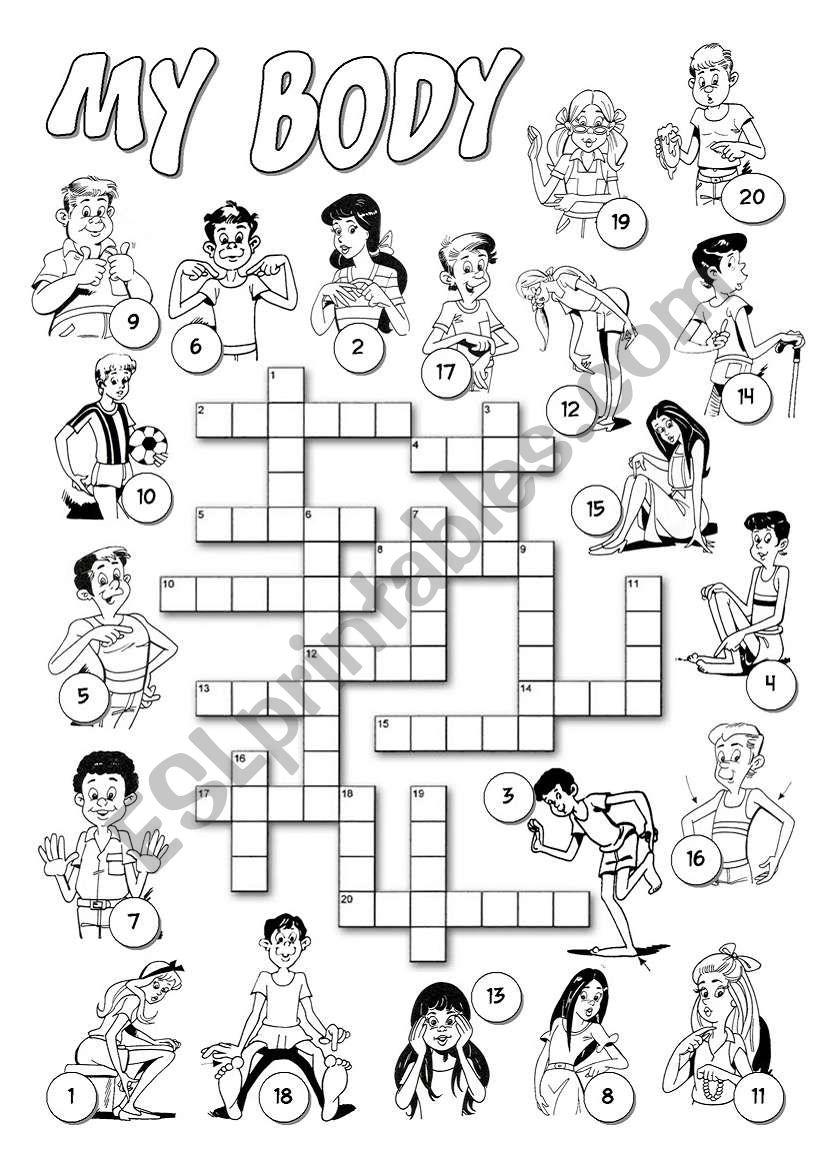 English worksheets: My Body Crossword