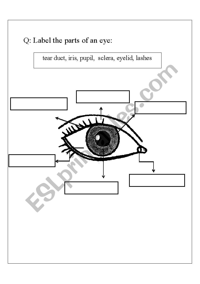 Parts of an eye  ESL worksheet by step2eternity