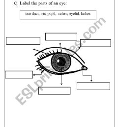 32 Label Parts Of The Eye Worksheet - Labels Database 2020 [ 1169 x 826 Pixel ]