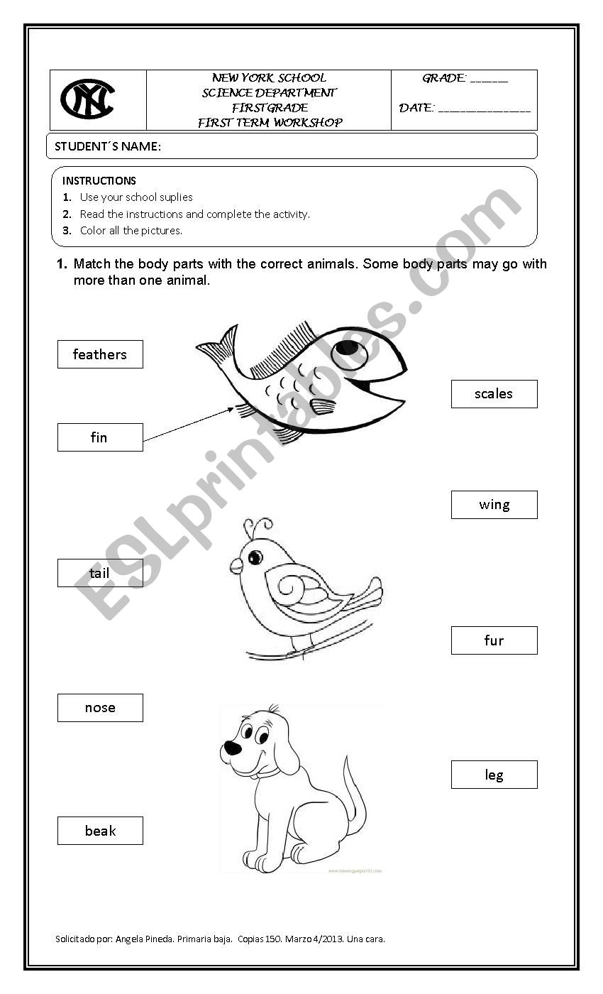 medium resolution of Animals characteristics - ESL worksheet by angelitapirili