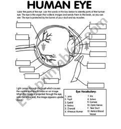 label the eye worksheet [ 826 x 1169 Pixel ]