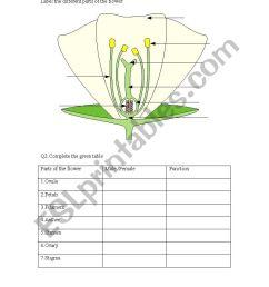 parts of a flower worksheet [ 826 x 1169 Pixel ]