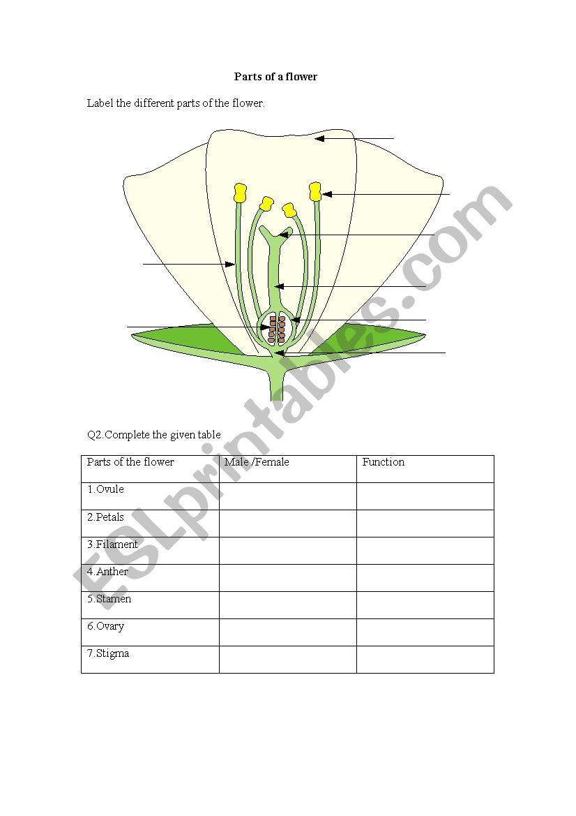 medium resolution of parts of a flower worksheet