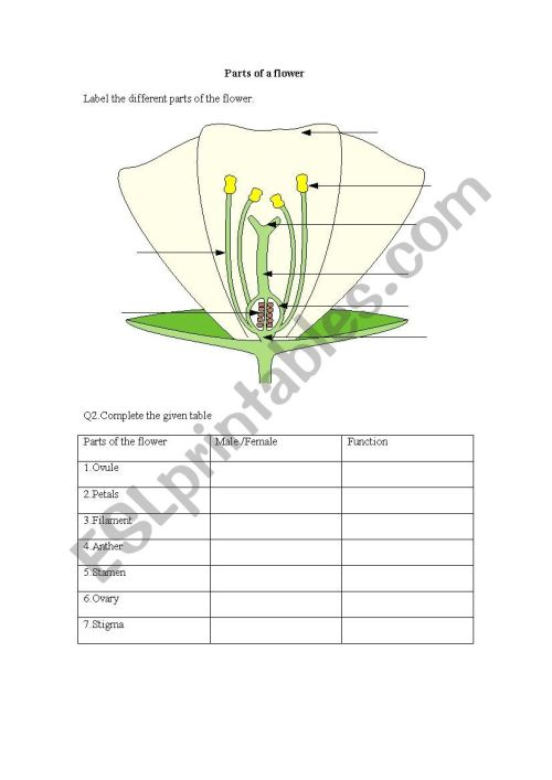 small resolution of parts of a flower worksheet