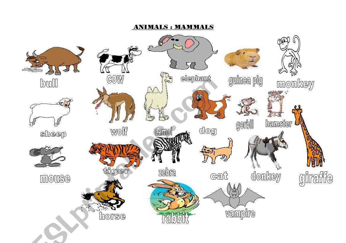 Animals Groups