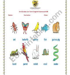 animals - ESL worksheet by gulbahart [ 1169 x 826 Pixel ]