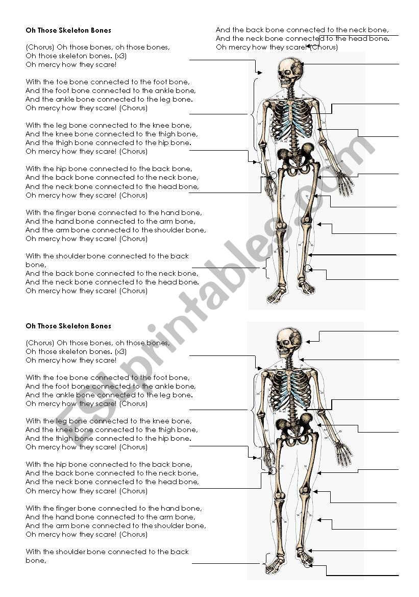 medium resolution of skeleton bones song lyrics and labels