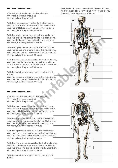small resolution of skeleton bones song lyrics and labels