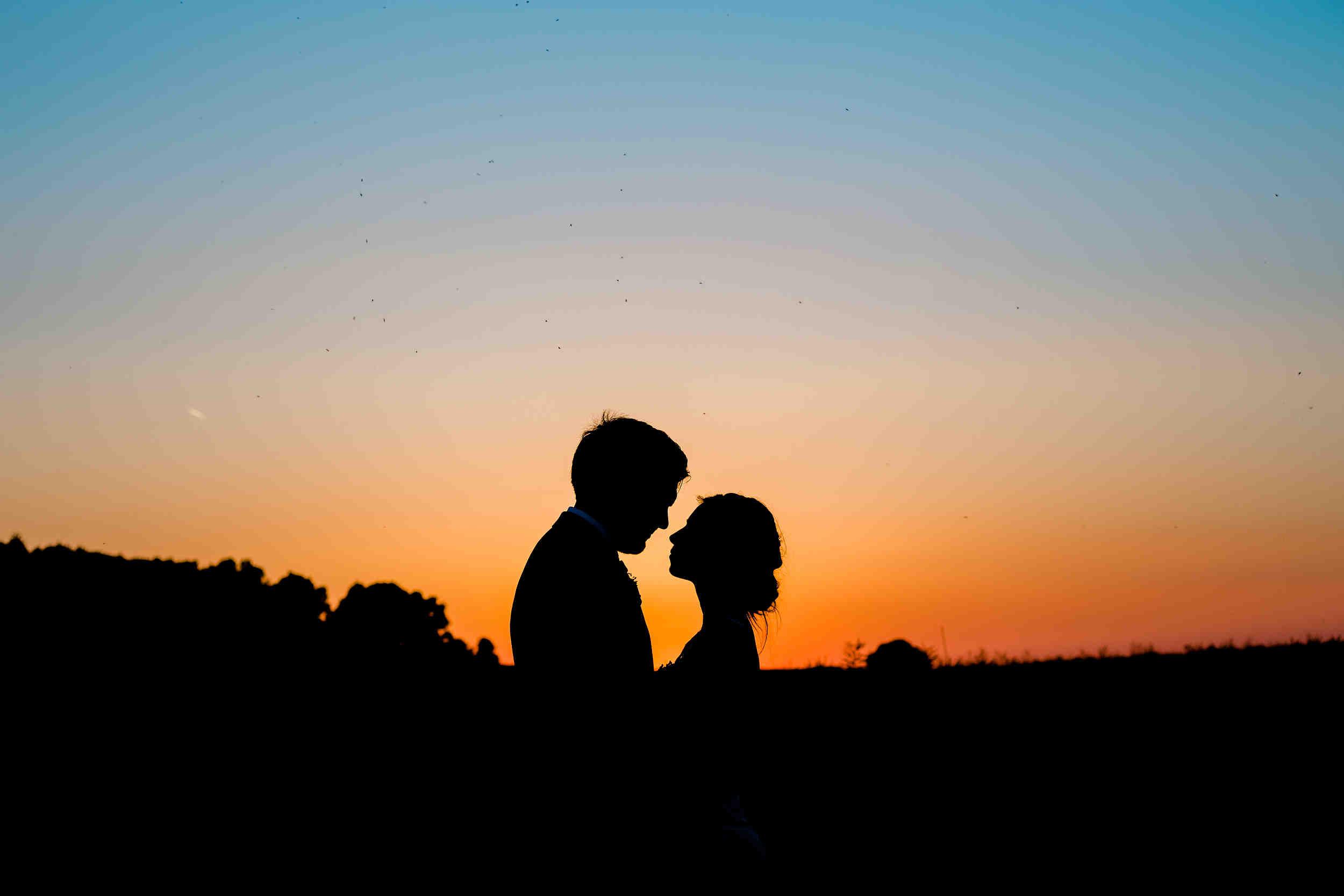 silhouette swallows nest barn