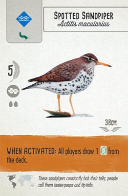 Wingspan Card