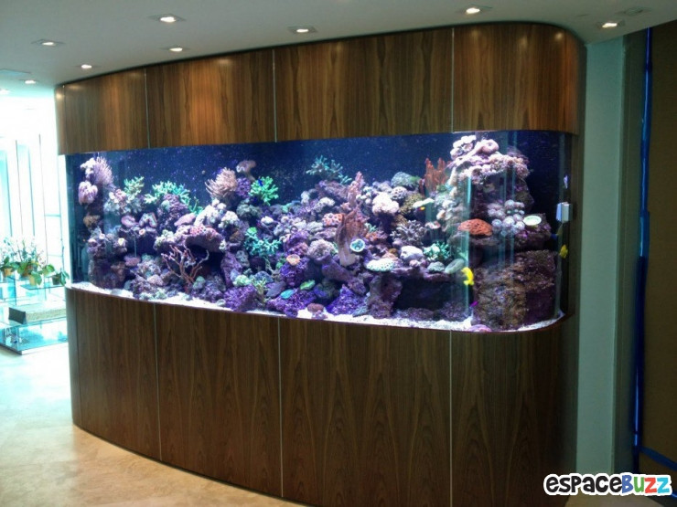 26 Aquariums Dexception