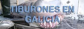 Tiburones en Galicia