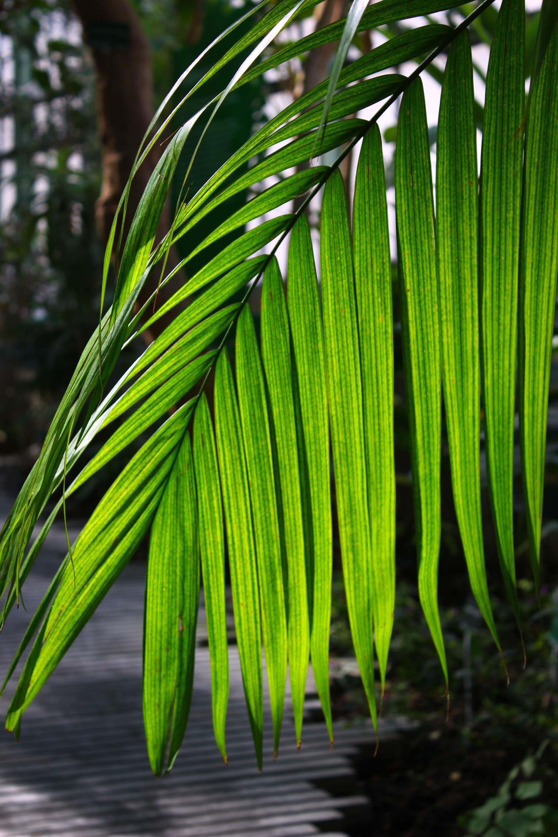 Sous les tropiques des grandes serres jardin des plantes for Plantes paris