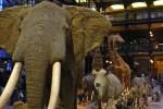Grande galerie de l'évolution, MNHN