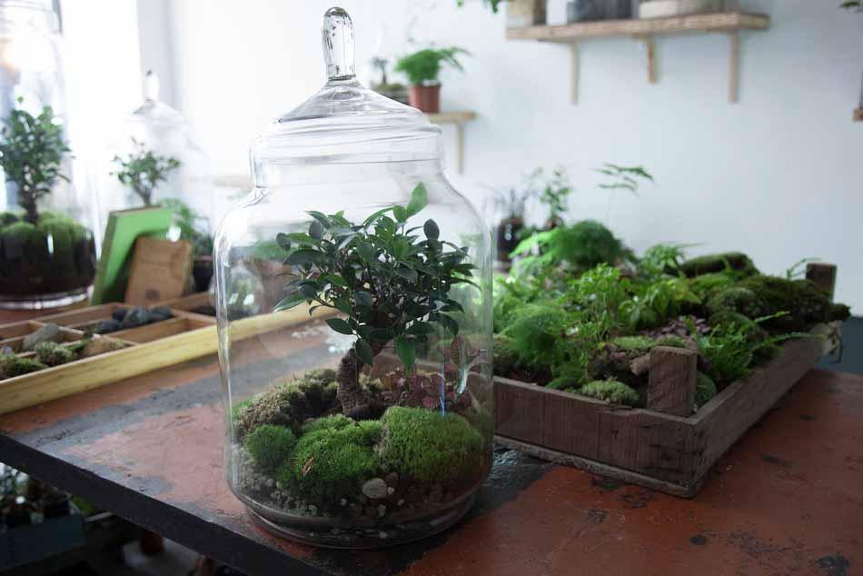 Les jardins de verre de la Green Factory