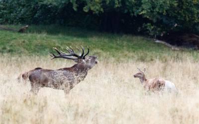 Seguendo il bramito dei cervi