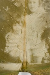 Lucia Baldini, Due foglie, 2011, fotografie su foglie di calla, dimensioni variabili