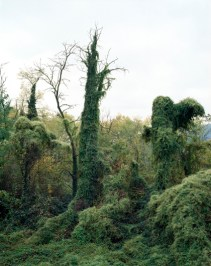 Edoarado Valle, 2011, cm 190x150
