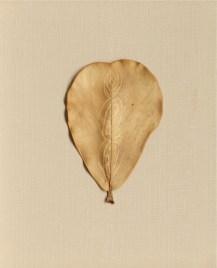 Ana Mendieta, Untitled (Senza titolo), 1982 ca., disegno su foglia, cm 14 x 9.5, Collezione privata, Parigi © The Estate of Ana Mendieta Collection Courtesy Galerie Lelong, New York