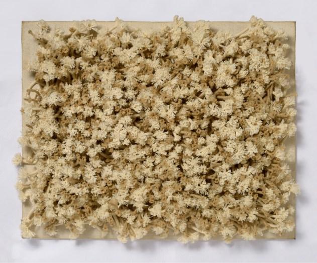 Jack Clemente, Senza titolo, 1966, olio corde e nodi intrecciati su tela, cm 40x50, Studio Gariboldi, Milano-Bergamo