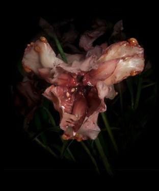 Mat Collishaw Venal Muse Left, 2013 fotografia C-type, 100x120cm