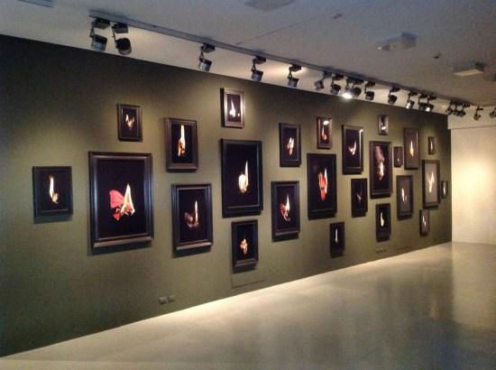 Mat Collishaw, Preternatural, veduta della mostra, FaMa Gallery, Verona 2013, Courtesy FaMa Gallery