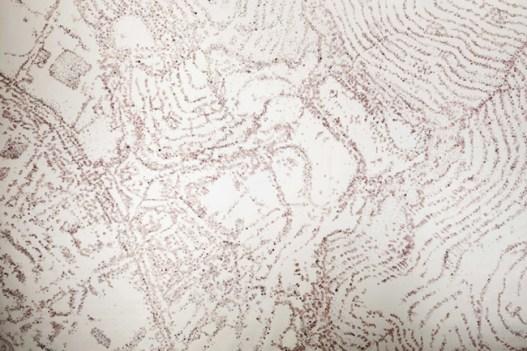 Caterina Sbrana, Mappa geomorfologica, 2013, pigmento, capsula -di papavero premuta su carta cotone paper, cm. 200x240, photo credits -Diego Barsuglia