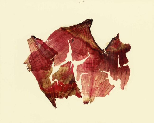 "Nino Migliori, da "" Herbarium"", 1974, C-print."