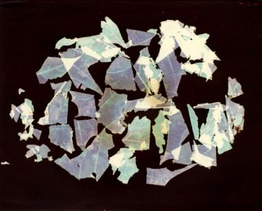 Nino Migliori, da Herbarium, 1974, C-print Vintage 03
