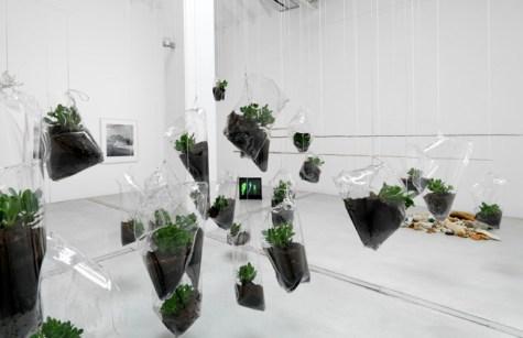 De Rerum Natura, installation view - 2014 Foto Michele Alberto Sereni Courtesy Studio la Città - Verona