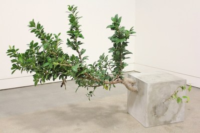 Andre Woodward Just Out of Reach - 2012 Cemento e Ficus, 76,2 x 127 x 55,8 cm / Cement and Ficus Courtesy Studio la Città - Verona