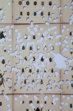 Gianluca Quaglia, Coleotteri#4, 2015, intagli su quindici tavole entomologiche di fine '800, 66x76 cm (dettaglio) Foto Marcella Savino